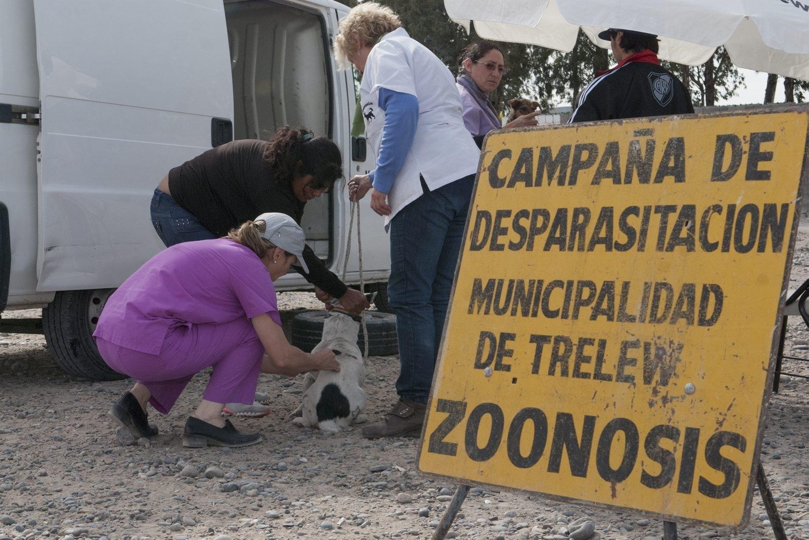 Campaña Zoonosis